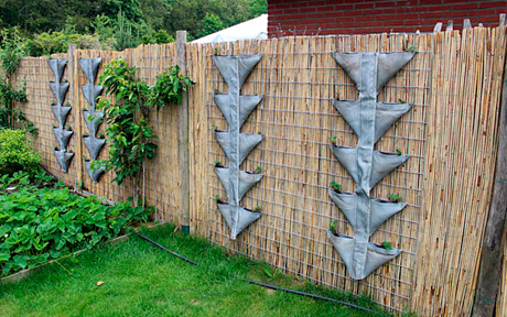 Vertical gardening is an agricultural method that maximizes land use Photo: Anglican Communion News Service