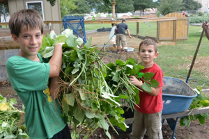 Volunteers work at the Giving Fields, a local community garden.