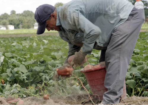 Farmworkers range in age from 18 or 19 to more than 50 years old. Photo: Lynette Wilson/ENS