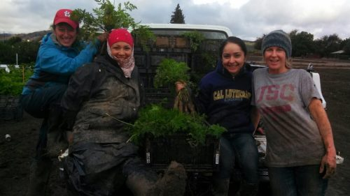 Abundant Table team members celebrate their muddy carrot harvest. Carrots from the sustainable farm will go to the Ventura Unified School District in California. Photo: The Abundant Table