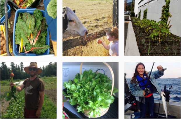 A selection of pictures submitted to justGeneration.ca's first Instagram contest on food security. Photos: Contributed