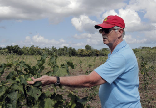 Dan Tootle, an Episcopal Church volunteer in mission, has worked diligently on the St. Barnabas' revitalization plan, which is intended to turn the agriculture college into a regional center for agriculture and economic development. Photo: Lynette Wilson/Episcopal News Service