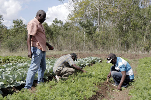 Etienne Saint-Ange, coordinator of field operations, talks with workers weeding carrots in the test plot, where plants are being tested for their viability. Photo: Lynette Wilson/Episcopal News Service
