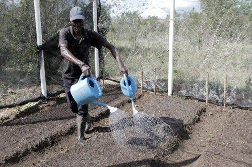 Un jour de février, un employé arrosait les semis dans la serre du Centre d'agriculture St-Barnabas à Terrier-Rouge en Haïti. Situé dans le Nord du pays dans la plaine côtière, l'école de près de 200 hectares est à 2 km de l'Océan atlantique. Photo: Lynette Wilson/Episcopal News Service