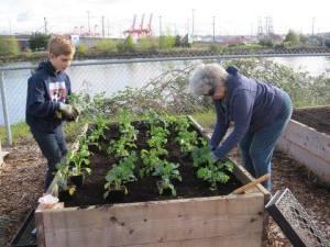 El trabajo voluntario en la Misión a los Marinos de Seattle con frecuencia es una actividad intergeneracional. Aquí se ve a dos voluntarios plantando en uno de los arriates elevados en mayo de 2015. Foto de la Misión a los Marinos de Seattle vía Facebook.