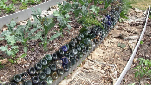 Rows of wine bottles, thought to transfer the sun's warmth and heat the soil, line a garden bed at St. Andrew's Episcopal Church in Seattle. Photo: Mary Frances Schjonberg/Episcopal News Service