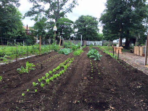 Rows of crops are seen growing earlier this year at the Garden of St. Francis in North Bellmore, New York. Photo: Garden of St. Francis