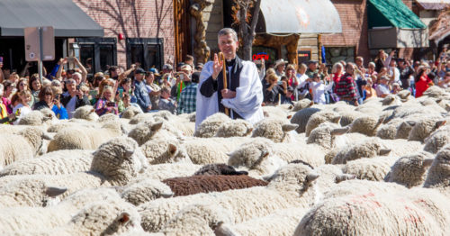 The Rev. Ken Brannon blesses thousands of sheep Oct. 9 as part of Ketchum's annual Trailing of the Sheep Festival. Photo: Mike Patterson