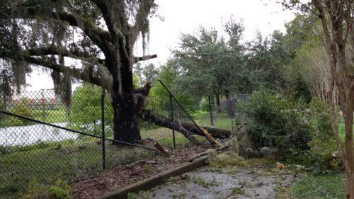 Trees in Winter Park, Florida, lie damaged in Hurricane Matthew's wake. Photo: Alison Harrity