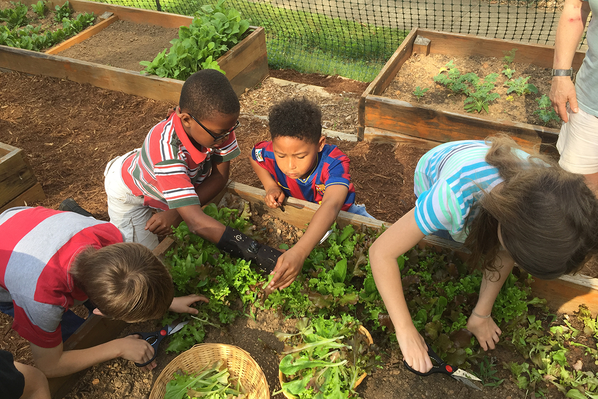 Charlottesville congregation\'s food education ministry grows into ...