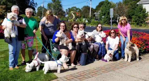 Perfect Paws dog gathering